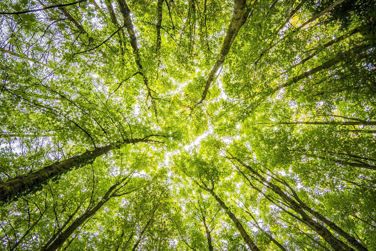 training a random forest machine learning model